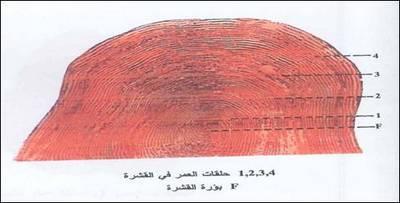 Large_1145191743