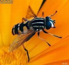 انواع الحشرات والزواحف المؤذية التى تلازمنا فى المنازل Large_1238226297