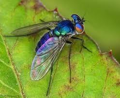انواع الحشرات والزواحف المؤذية التى تلازمنا فى المنازل Large_1238226298