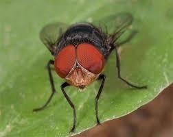 انواع الحشرات والزواحف المؤذية التى تلازمنا فى المنازل Large_1238226299