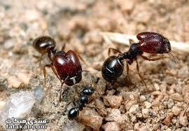 انواع الحشرات والزواحف المؤذية التى تلازمنا فى المنازل Large_1238226310