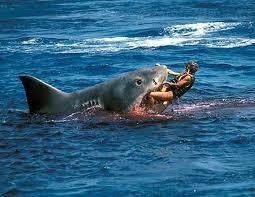 سمك القرش دخل إلى لبنان!