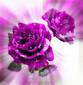 Thumbnail_1238486241
