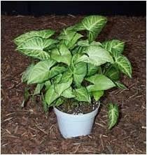 أنواع نباتات الظل اختاري مايناسب ذوقك large_1238061109.jpg